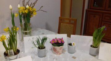 Zorganizowaliśmy sobie trochę wiosny. Przebiśnieg, żąkil, krokus, hiacynt, tulipany, prymulka